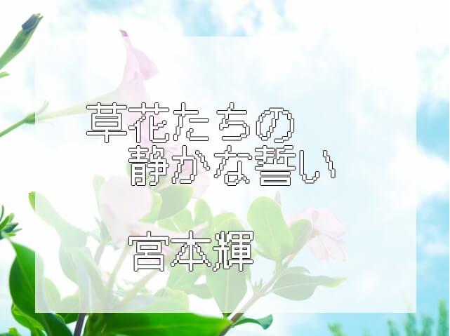 俯瞰で見たペチュニアの白い花