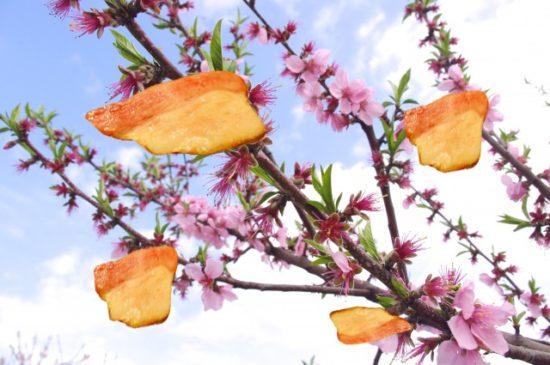 梅の花とホワイトスモークベーコン