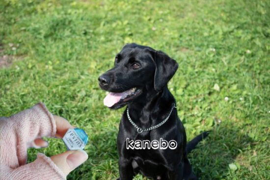 かわいい犬とsuisaiパウダー